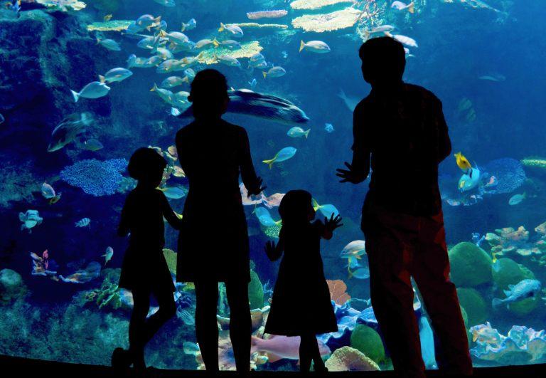 family_aquarium_M